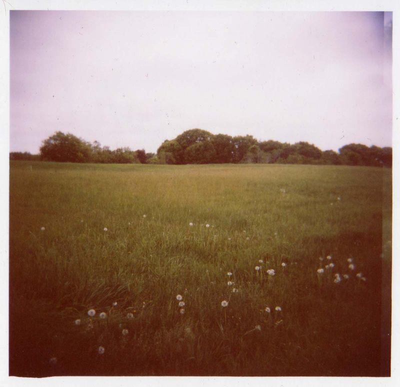 Holgafield